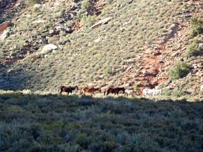 Free range horses