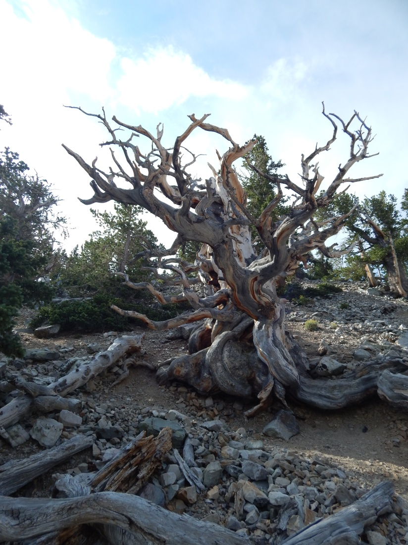 Finding solitude in a National Park during the busiest season – Great Basin NP